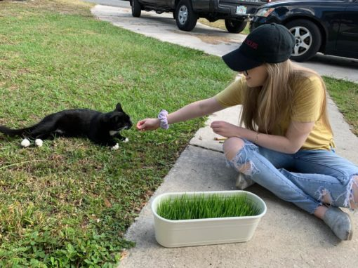 GIY Wheatgrass is a family favorite