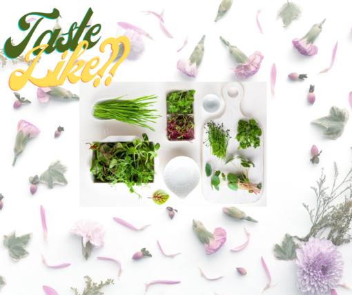 Flavor profile   microgreens  lakeland, FL